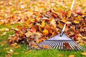 Leaf Vacuum Begins